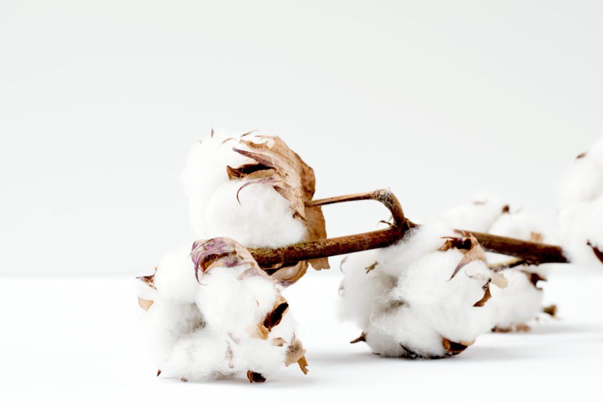 coton